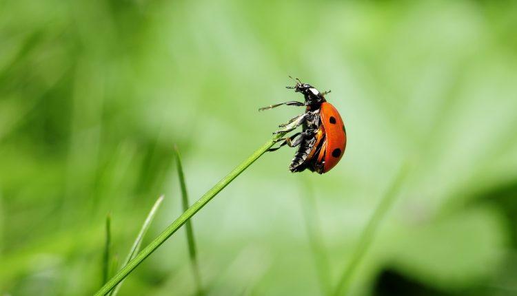 prevenire-muscaturi-insecte